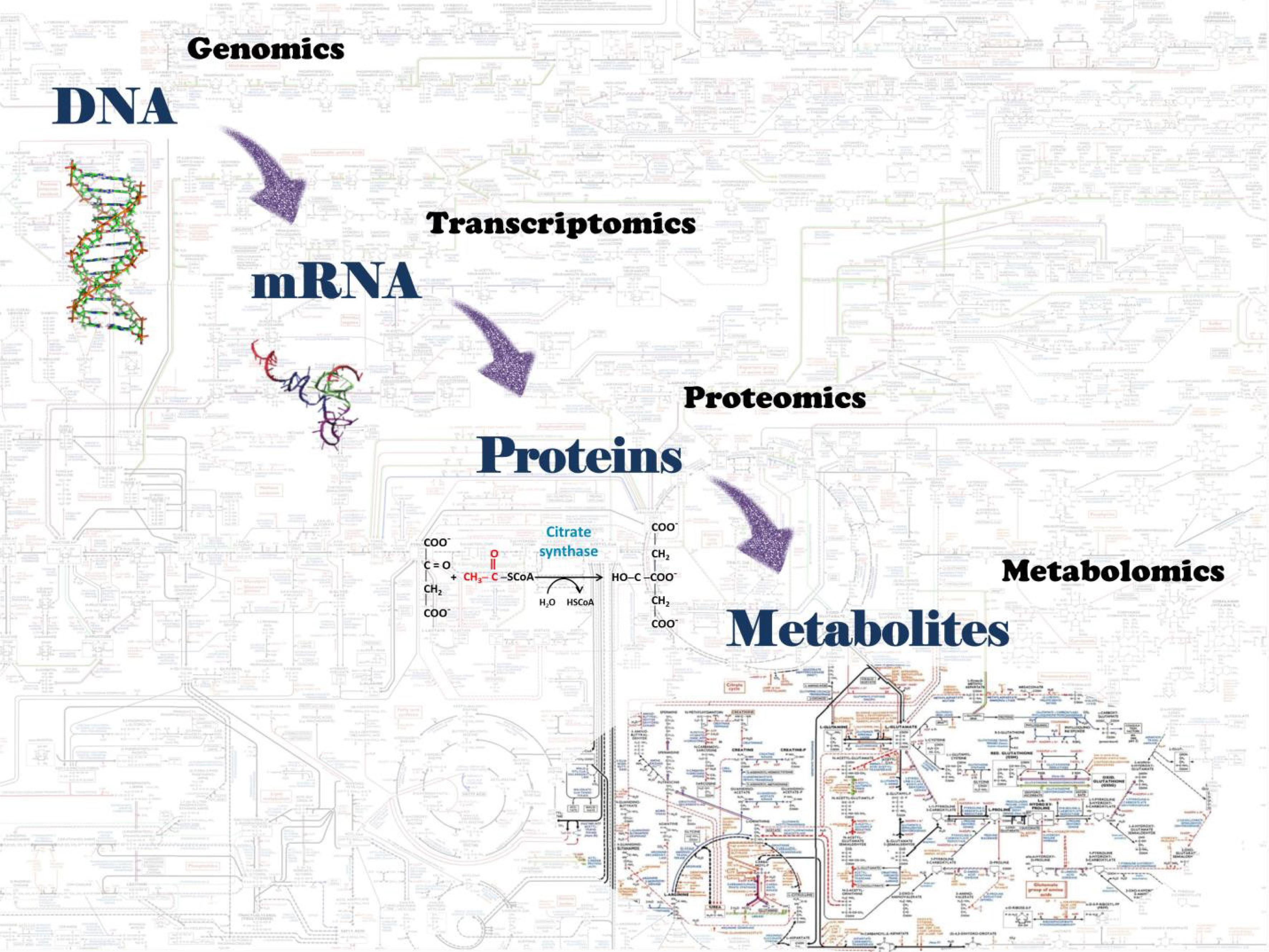 Omics science components of biological systems