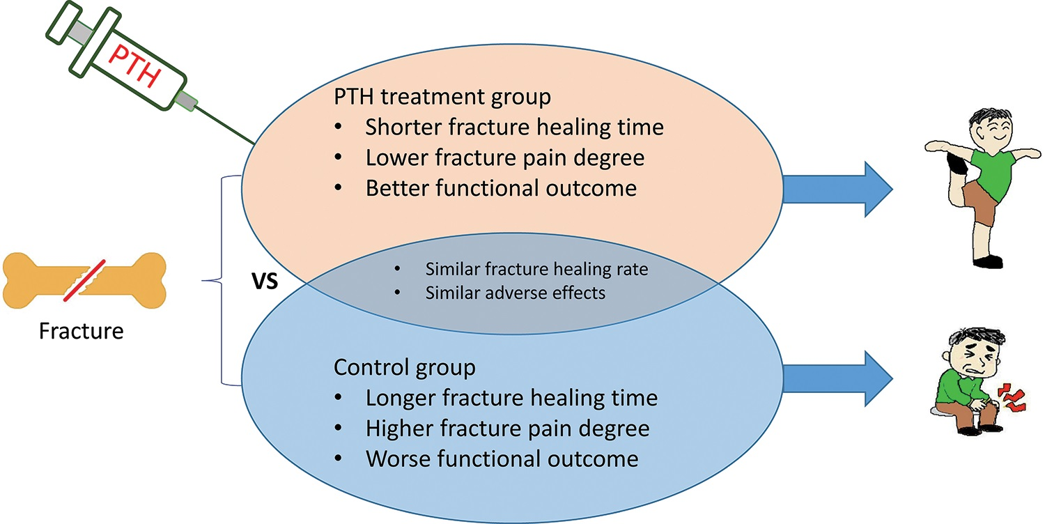 Comparison of the effectiveness and safety of parathyroid hormone in fracture healing.