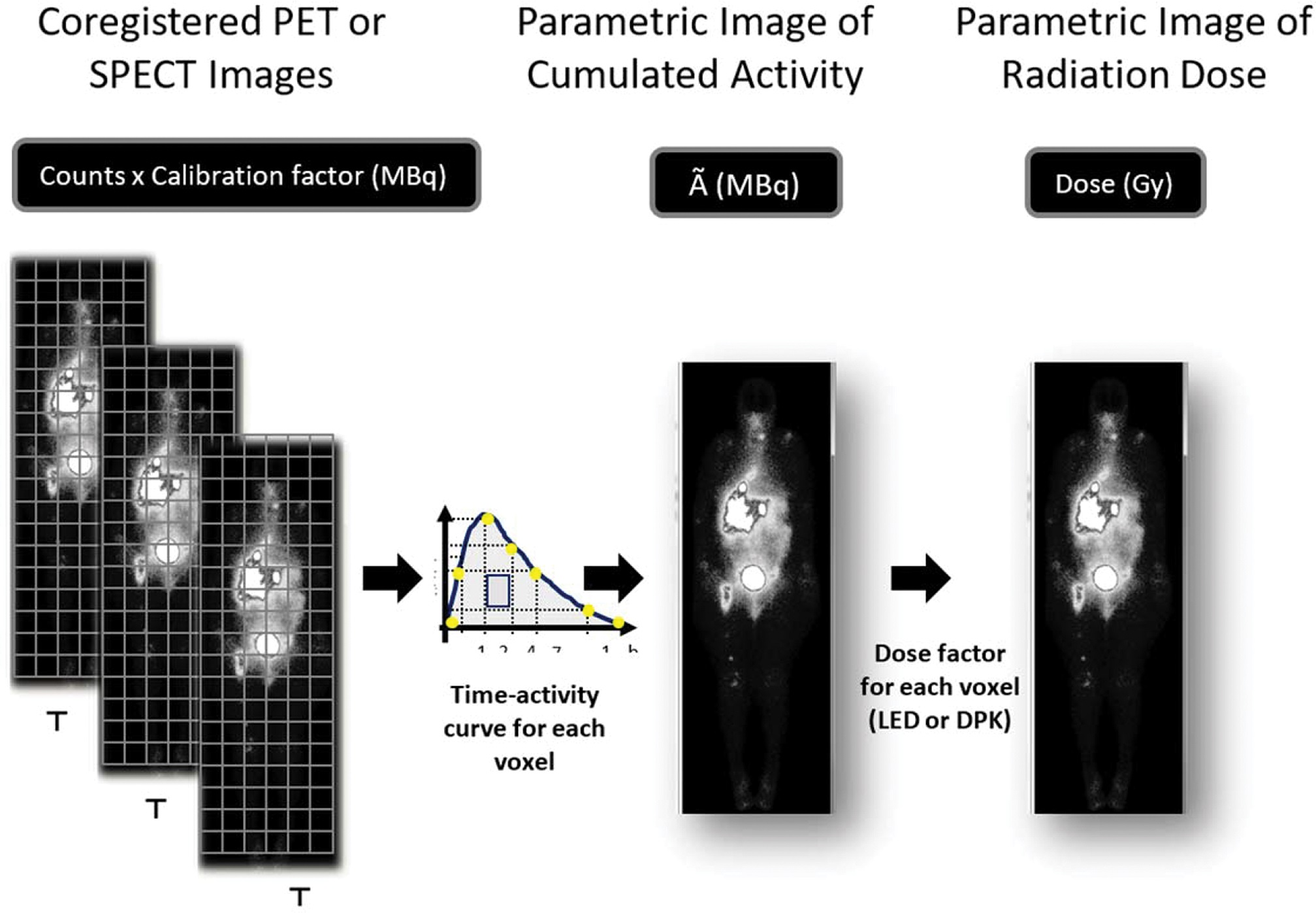 Sequential PET or SPECT images are coregistered so that a voxel of the same xyz coordinate always corresponds to the same structure. The calibration factor allows the transformation of counts in radioactivity (MBq). A parametric image of accumulated activity à (MBq.h) is obtained from the integral of activity through time in each voxel. The energy deposited in each voxel is calculated based on the local energy deposition (LED) or dose point kernel (DPK) and results in the radiation absorbed dose parametric image (Gy).