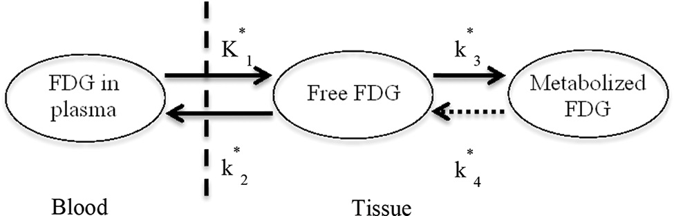 Two-tissue compartment model describing [18F]FDG pharmacokinetics, including the blood-to-tissue [18F]FDG transport rate (K1), tissue-to-blood [18F]FDG transport rate (k2), phosphorylation to [18F]FDG-6-phosphate rate (k3), and dephosphorylation rate (k4).