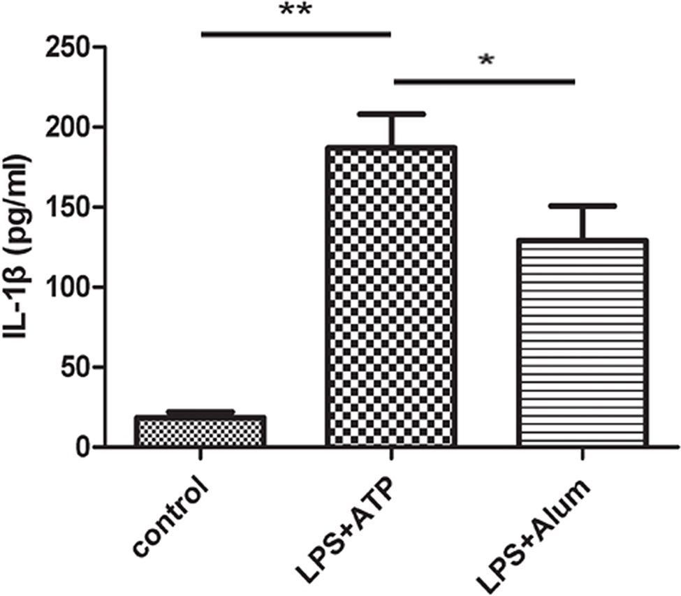 IL-1β was produced in cortical neurons in response to inflammatory stimuli. Cultured primary cortical neurons were treated with LPS and ATP or LPS and alum, and the IL-1β level in the supernatant of the culture was assessed with ELISA. *p<0.05; **p<0.01.