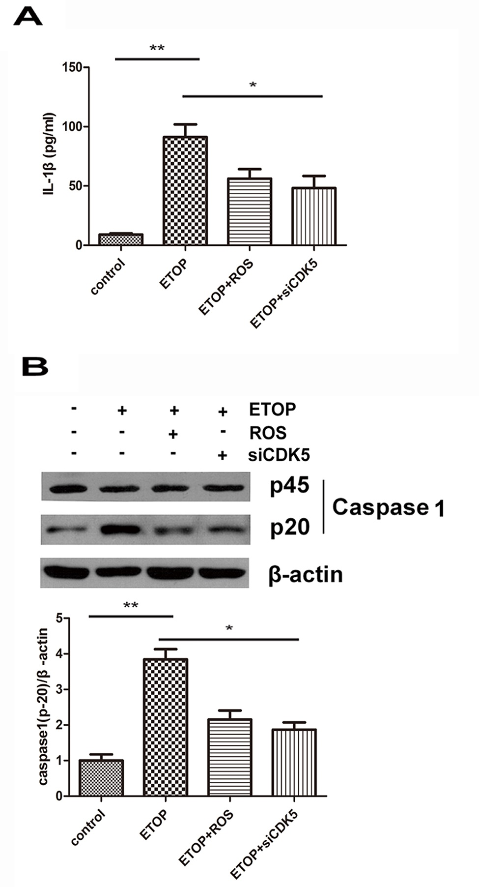 CDK5 provoked the production of IL-1β in cortical neurons. Cultured primary cortical neurons were treated with 10 μM ETOP or 10 μM ETOP plus ROS, a CDK5 inhibitor, for 12 h. For RNA interference, cells were pretreated with siCDK5 for 24 h, followed by 10 μM ETOP plus siCDK5 incubation for another 12 h. Untreated cells were used as the control group. (A) The IL-1β level in the supernatant of the cell culture was assessed by ELISA. (B) The protein expression levels of pro-caspase 1 (p45) and activated caspase 1 (p20) were assessed by Western blotting. *p<0.05; **p<0.01.