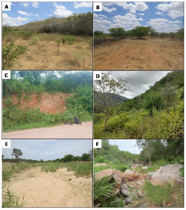 Áreas com diferentes arranjos ambientais e diferentes índices de conectividade.