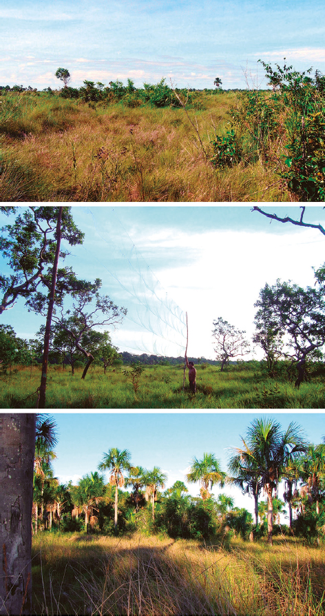 Panoramic views of the Pampas del Heath from Peru (top) with patches of forests (middle) and palms (bottom).