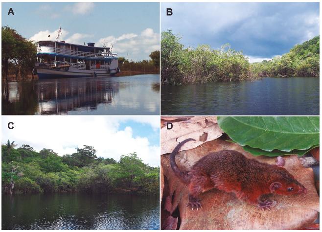 Aspectos gerais da amostragem realizada na região do baixo Rio Jufari. A: Barco utilizado na expedição Jufari; B e C: Igarapé Caicubi nas proximidades dos sítios amostrais; D: Espécime de Monodelphis brevicaudata.