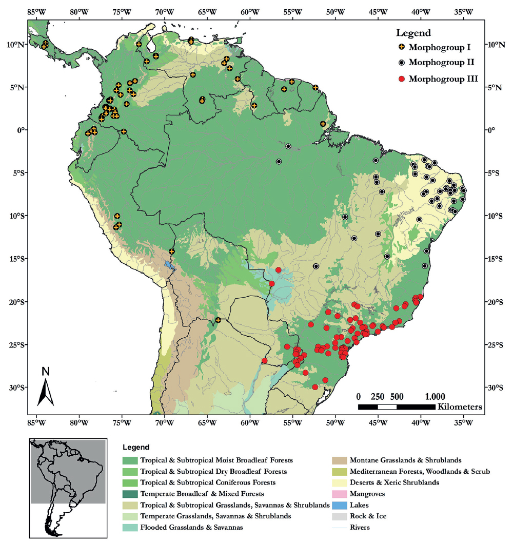 Distribution of morphogroups of tigrinas (L. tigrinus group) over the biomes of South America and part of Central America (data obtained from WWF - World Wide Fund for Nature). For color figure, see online version.