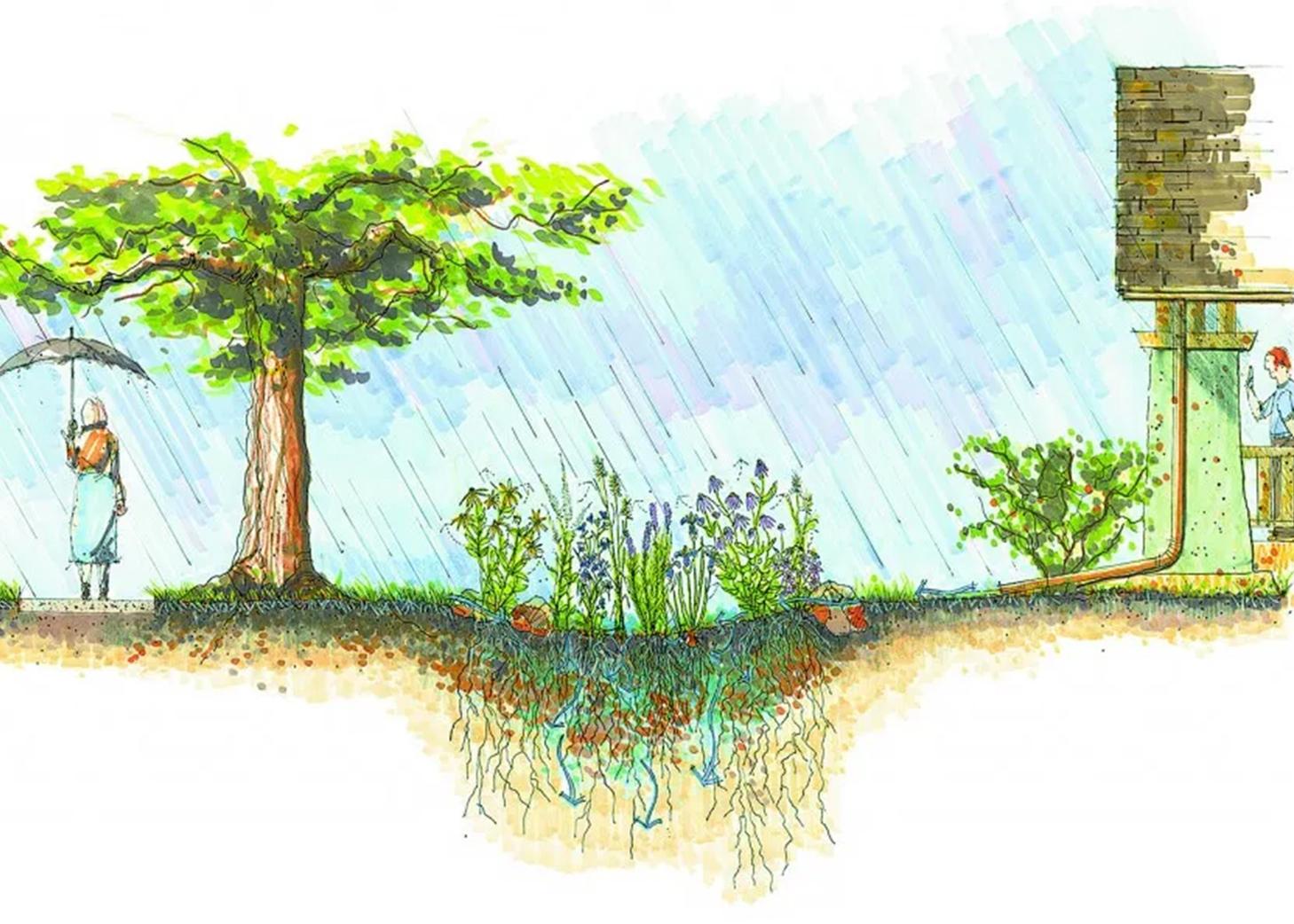 Corte ilustrativo de um jardim de chuva