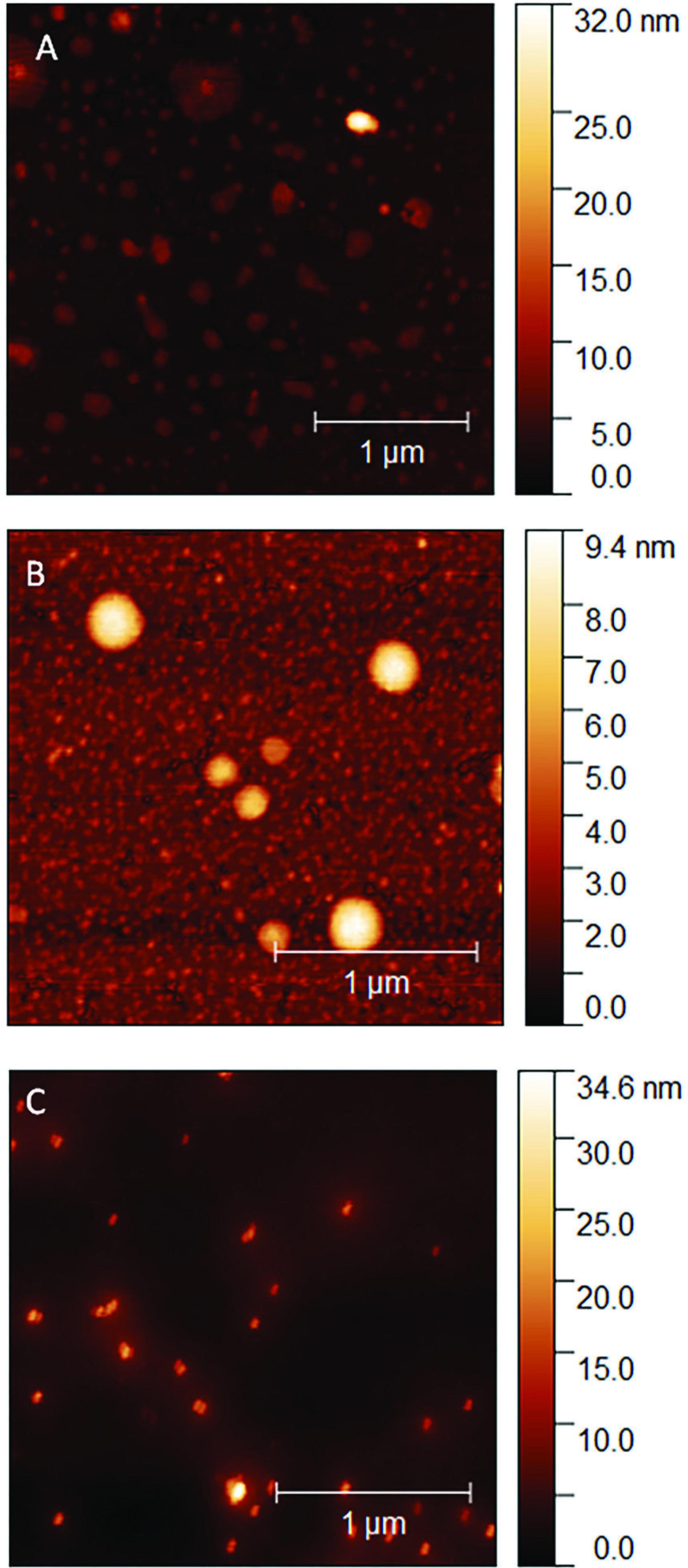 Atomic force spectroscopy analysis Ag NP (A), AgPVP (B), Ag 10% + polymer (C)