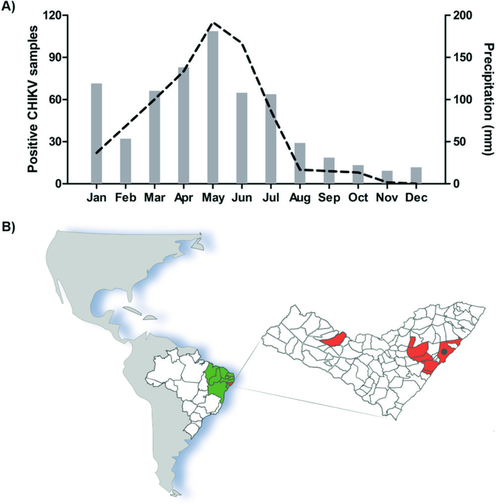 CHIKV positive samples during the 2016 outbreak in the Alagoas State. A) Number of CHIKV positive samples detected by qRT-PCR at the LACEN/AL (left axis) and rainfall precipitation of Alagoas State (right axis) from January to December 2016; B) Alagoas State map located in the northeast of Brazil, showing cities with positive CHIKV samples used in the genotype identification (n=11) colored in red. The capital city Maceio is represented by the black dot