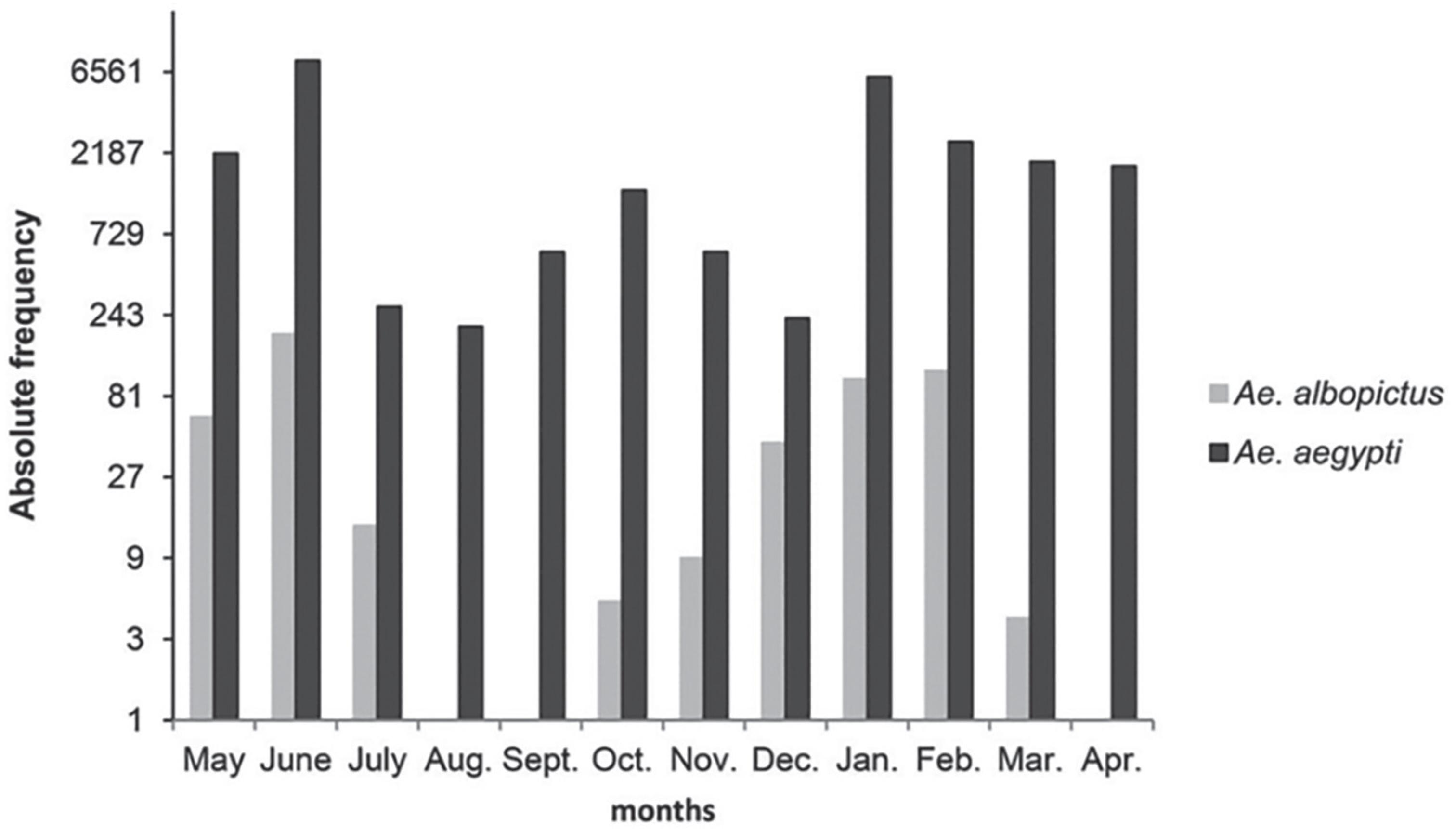 Monthly distribution of Aedes aegypti and Aedes albopictus in Campo Grande, MS, May/2012 to April/2013.