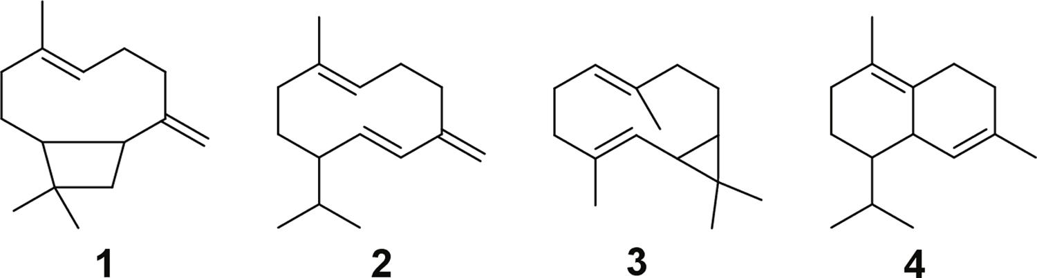 Chemical structures of the major compounds of M. divaricatum and C. sylvestris essential oils: 1) E-caryophyllene; 2) germacrene D; 3) bicyclogermacrene; 4) δ-cadinene.