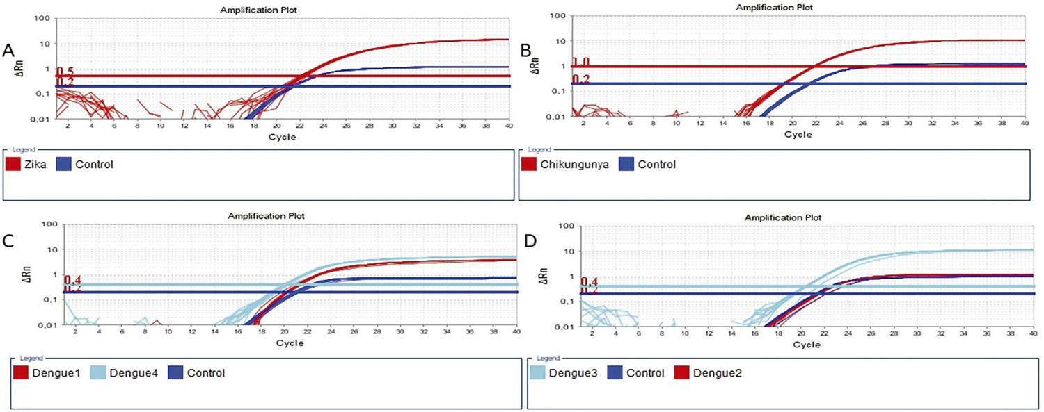 Amplification profiles depicting the Cts (on the abscissa axis) of positive samples for ZIKV, CHIKV, and DENV and the controls supplied by the Kit Biomol ZDC: A) Zika; B) Chikungunya; C) Dengue 1 and Dengue 4; D) Dengue 2 and Dengue 3. The amplification profiles of the studied viruses are represented in red or turquoise, while the controls are always represented in blue. The emitted fluorescence threshold (on the ordinate axis) for Zika is 0.5; for Dengue 1 and the Control is 0.2; for Dengue 2 is 0.5 and for Dengue 3 and 4 is 0.4 and for Chikungunya is 1.