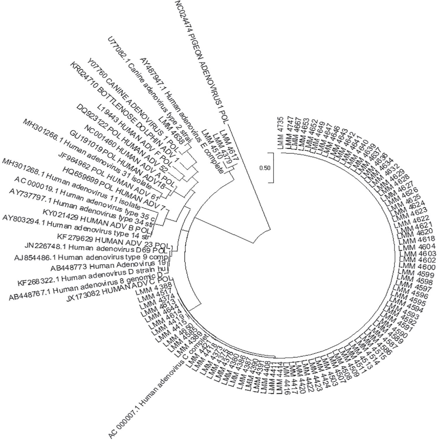 Phylogenetic tree of ADV-positive samples by the Neighbor-Joining method with the Kimura-2 model.
